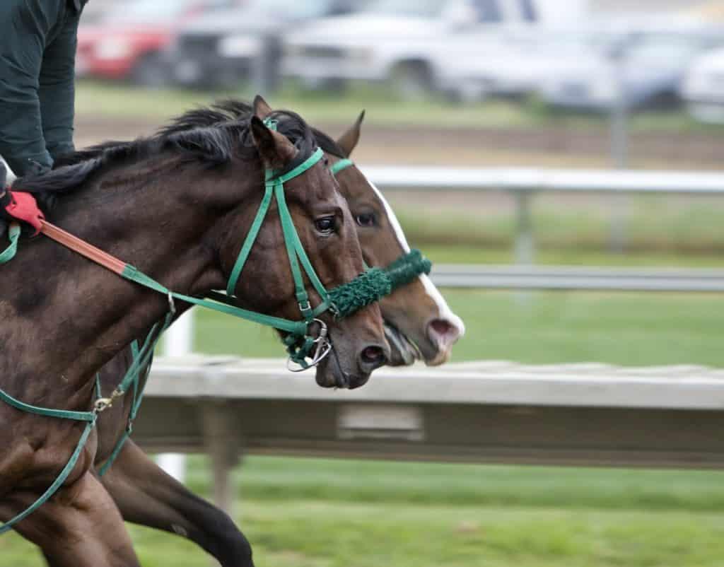 Pferderennen Wetten Anleitung